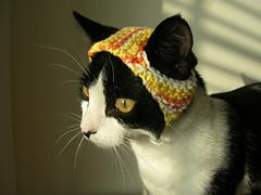A Hat for A Cat
